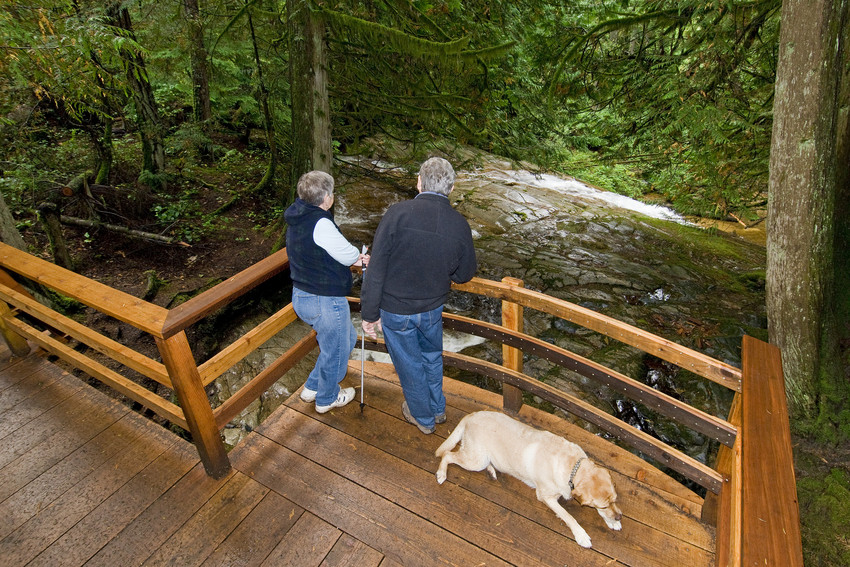 Dog friendly hiking at Cliff Gilker Park in Roberts Creek